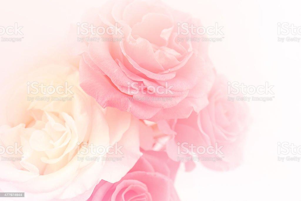 Rosarote Rosen in sanften Farben und blur Stil – Foto