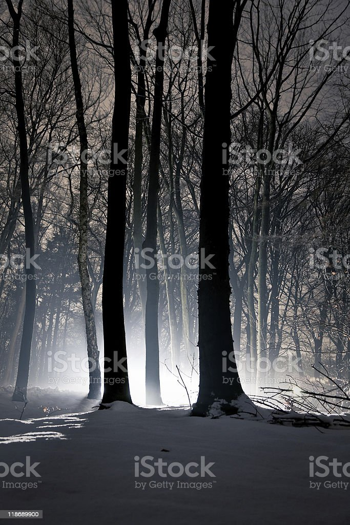 Light rays through forest royalty-free stock photo