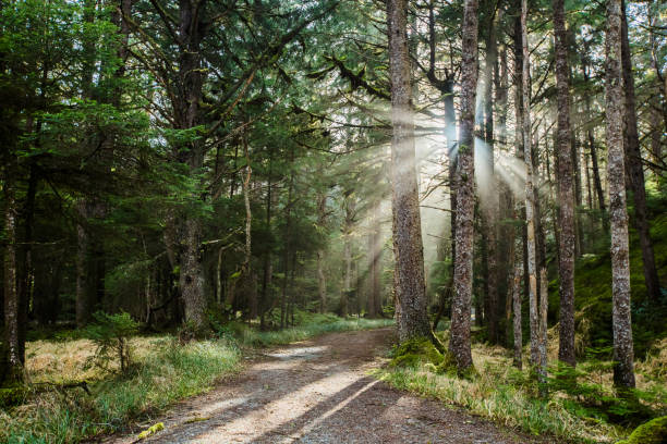 Light Shines in the Forest stock photo