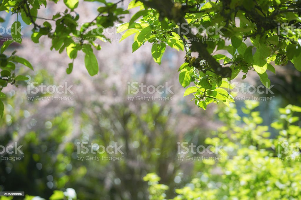 LIght shines trough leafs royalty-free stock photo