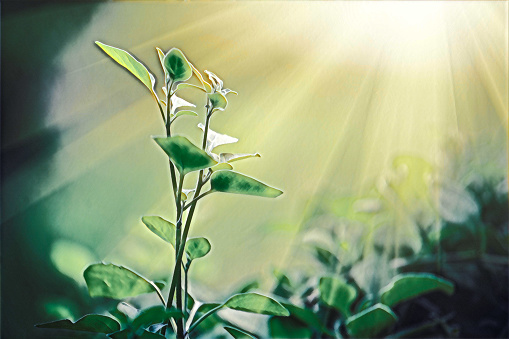 Light Shining On A Green Sprout Sustainable Energy Digital Painting Stock Photo - Download Image Now