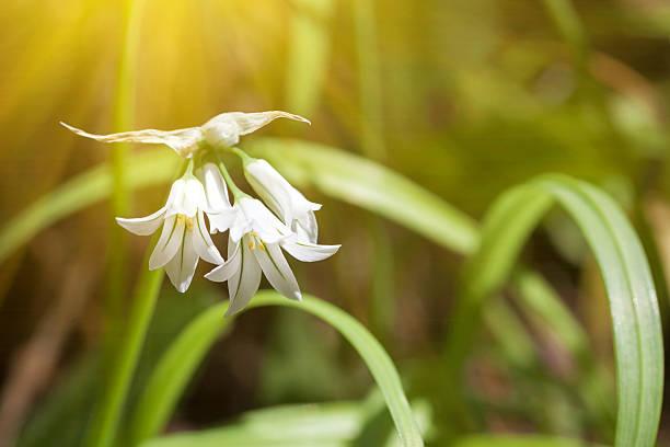 光輝くにホワイトの花柄とグリーン leafs ストックフォト