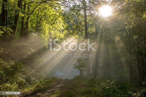 picture taken in Bohinj valley, Julian alps, Slovenia