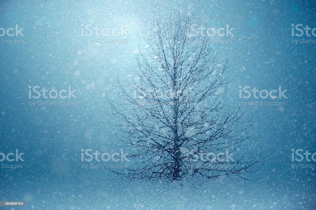 Light Shining Through The Winter Snow Storm stock photo