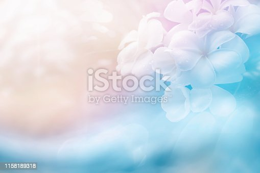 light soft bright sweet color for cool abstract nature background. plumeria flower, frangipani flower made by  pastel color filter for background.