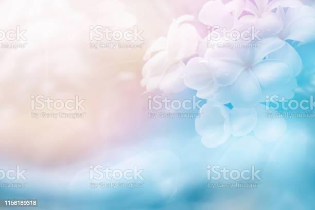 Photo of light soft plumeria flower