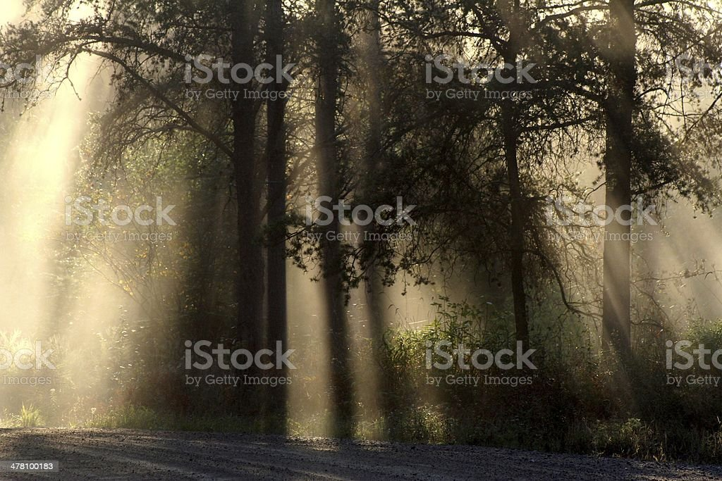 Light Stillness Shadow Movement stock photo