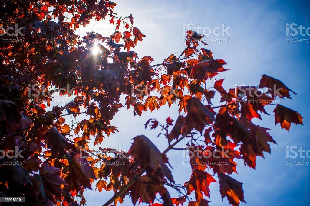 Light Through Leaves 2 stock photo