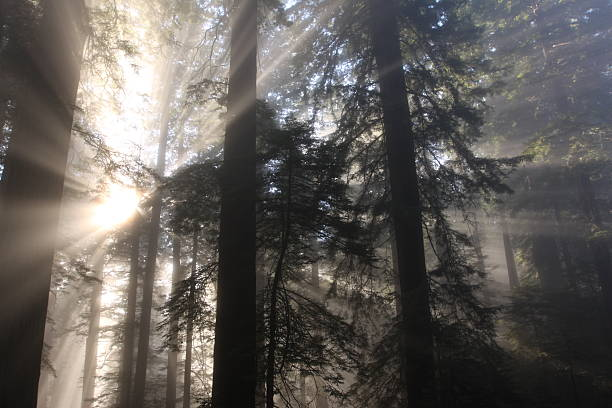 light through the trees stock photo