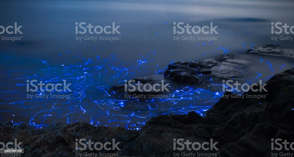 Light trails from bioluminescent sea fireflies floating in the ocean. stock photo