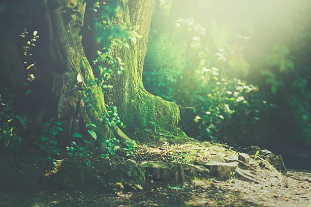 Light under a tree stock photo