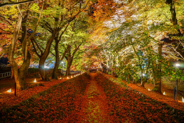 Light up red falling leaves under autumn tree in a canal in  Kawaguchiko Lake Light up red falling leaves under autumn tree in a canal in  Kawaguchiko Lake, Japan lake kawaguchi stock pictures, royalty-free photos & images