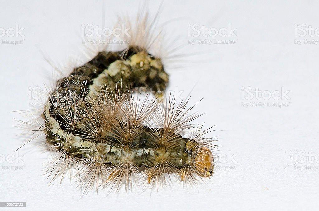 Lightbox catterpillar stock photo