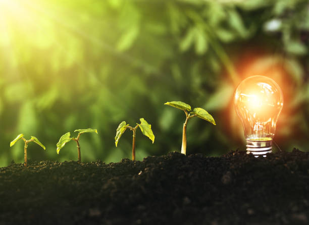 Lightbulb is located on the soil, and plant are growing. Renewable energy generation is essential in the future. stock photo