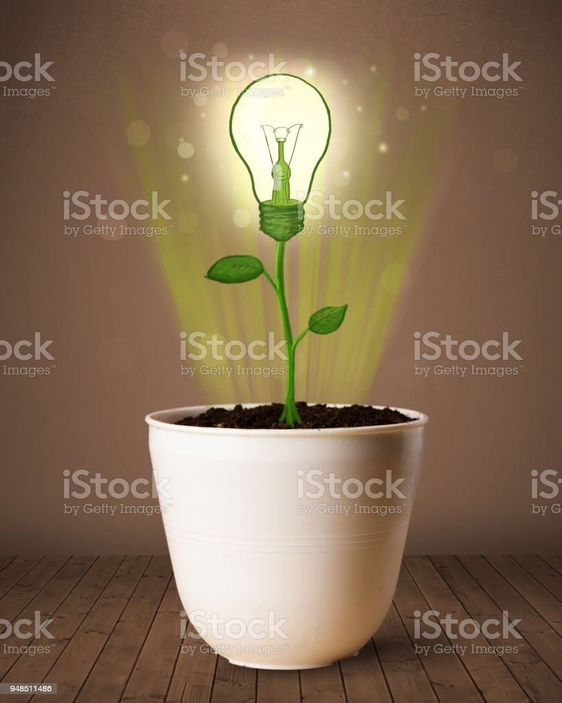 Lightbulb plant coming out of flowerpot stock photo