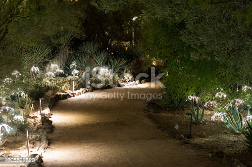 Gravel pathway lighted at night