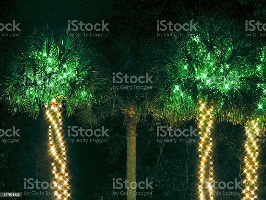 lighted palm palmetto trees tropical party christmas lights royalty free stock photo