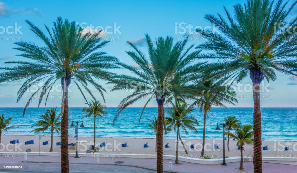 Lighted palm trees at dusk in front of sandy beach, Fort Lauderdale, Florida royalty-free stock photo