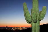 Illuminated saguaro cactus with city light view and sunset in background.