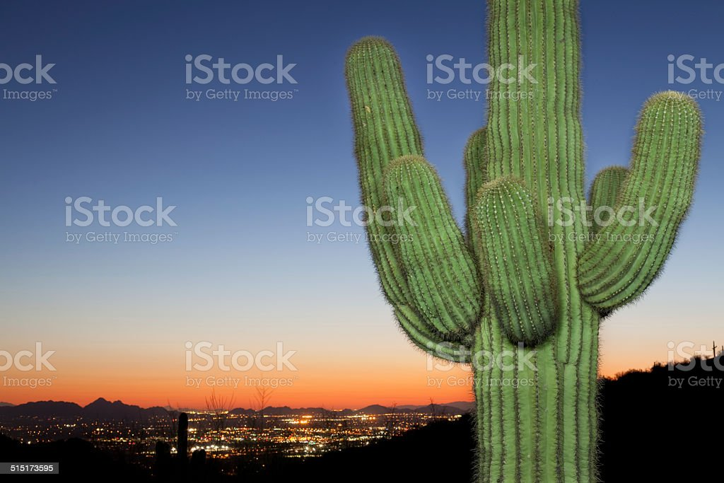 Lighted Saguaro City View Sunset stock photo