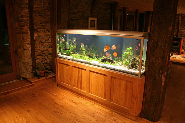 lighten fish tank in house - home aquarium stock pictures, royalty-free photos & images