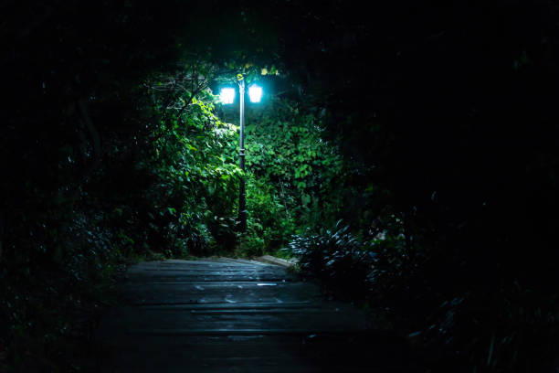 Lightening street lamp in the forest in the night, Seowipo, Jeju Island, Korea Lightening street lamp in the green forest in the night, Seowipo, Jeju Island, Korea seogwipo stock pictures, royalty-free photos & images
