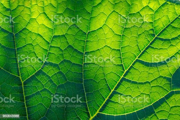 Photo of Light-flooded green leaf