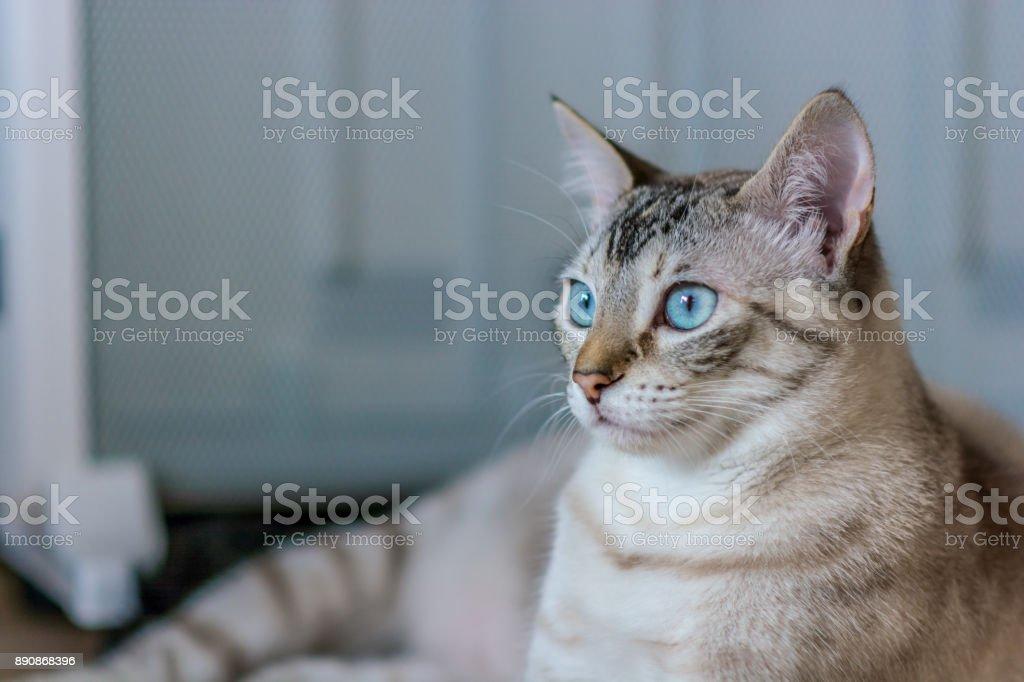 Luz pelo piel color femenino común gato descansando en el sofá en la sala de estar. - foto de stock