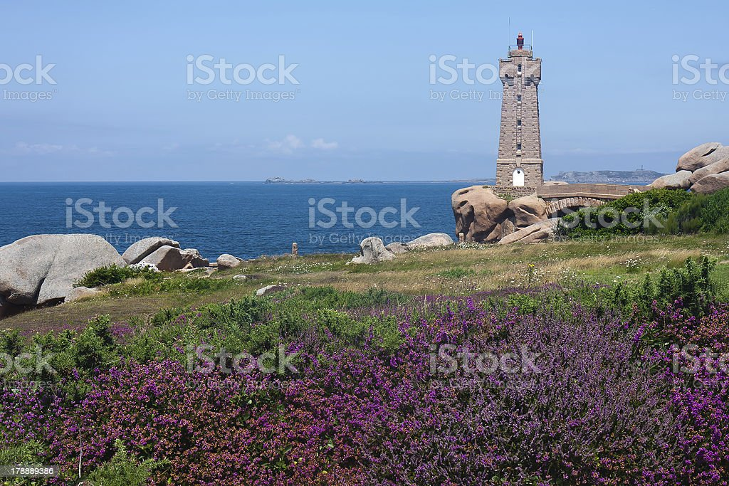 Lighthouse at coast of Brittany with purple heath in front royalty-free stock photo