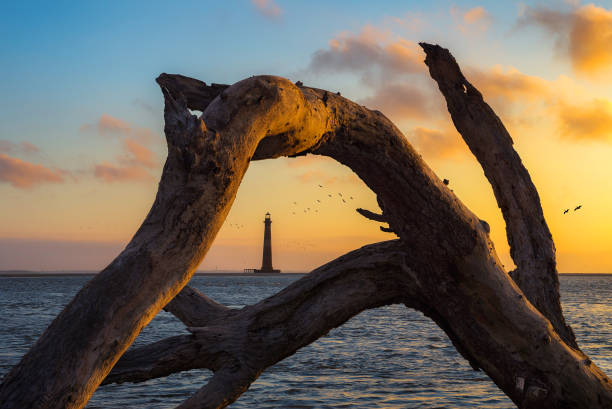 Lighthouse seen through a wethered oak tree stock photo