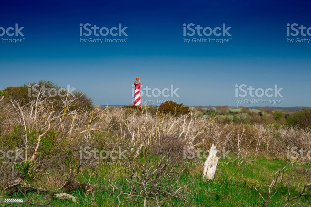 lighthouse Westerlichttoren in the dunes,  Burgh Haamstede, The Netherlands_ stock photo