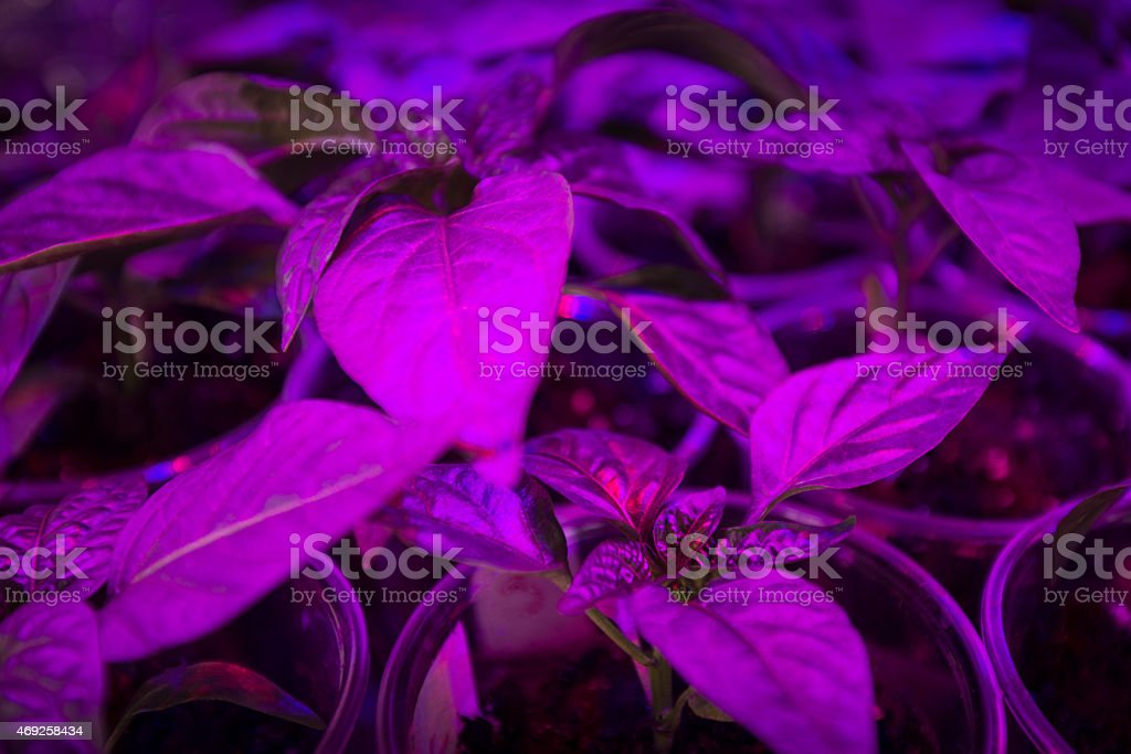 LED lighting Grow plants stock photo