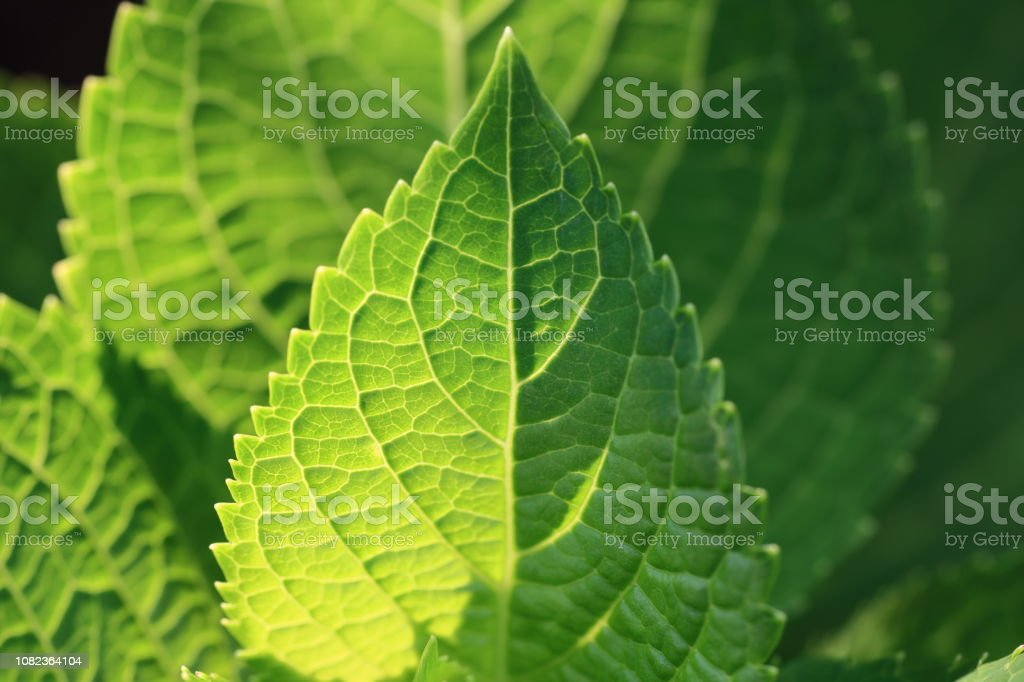 lighting revealed leaf vein pattern of a small plant in a landscape...