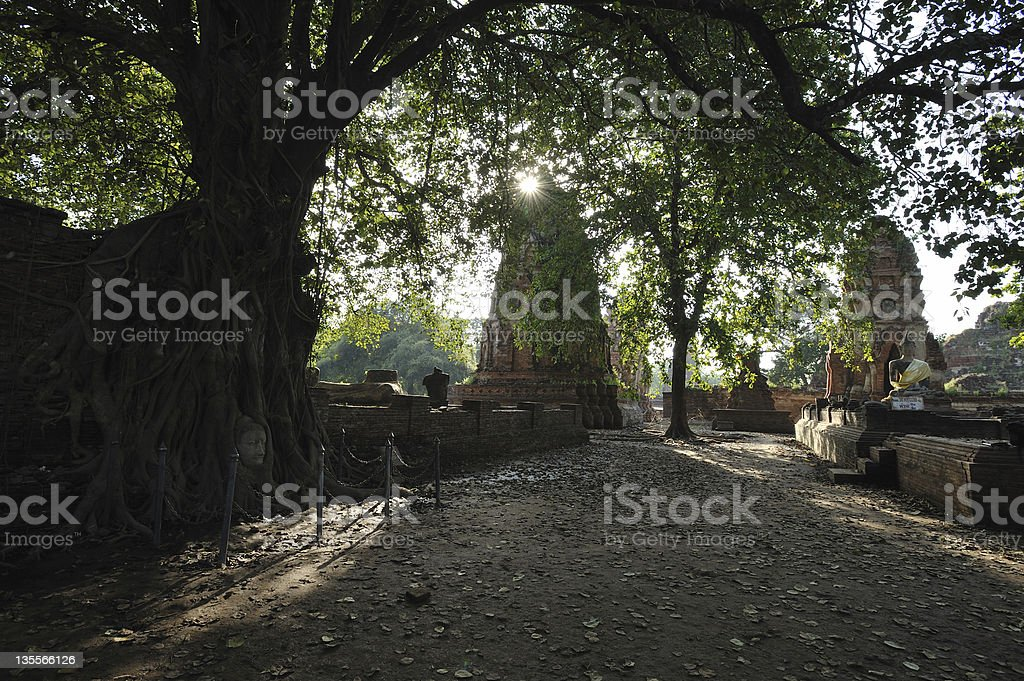 Lighting  shadow the tree royalty-free stock photo