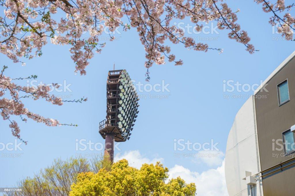 Lighting tower of baseball stadium and cherry blossoms foto stock royalty-free