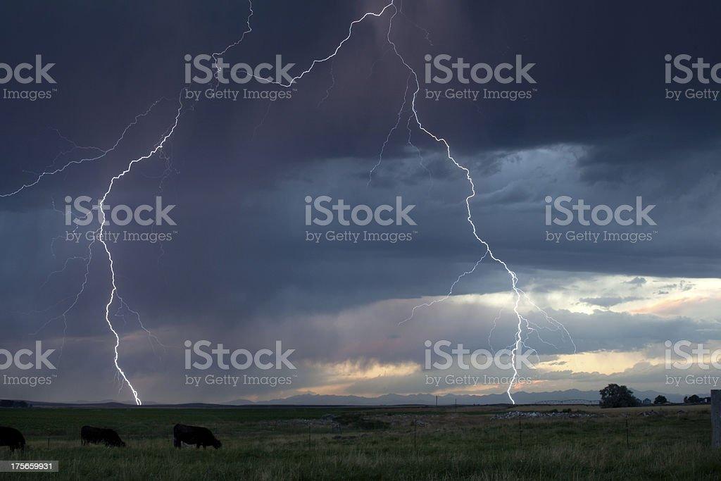 Blitz und Rind grasen in der Pasture – Foto