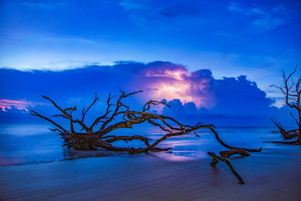 Lightning Storm at Driftwood Beach in Jekyll Island, Georgia, USA Lightning Storm at Sunrise Driftwood Beach in Jekyll Island, Georgia, GA, USA driftwood stock pictures, royalty-free photos & images
