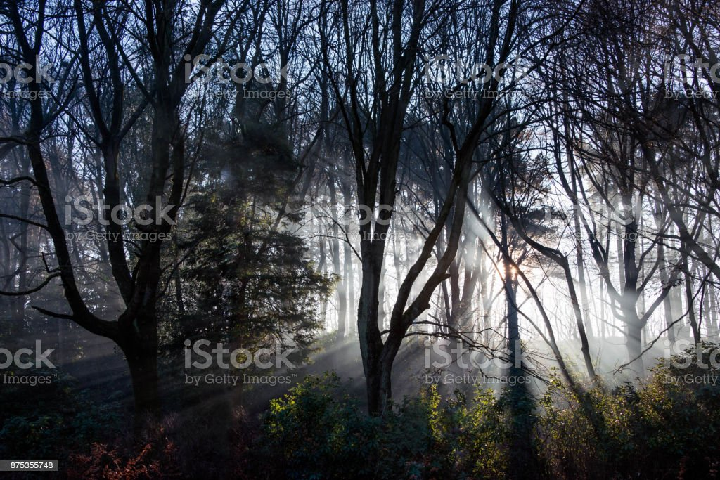 Lightrays shine between trees in a hazy woodland in the UK stock photo