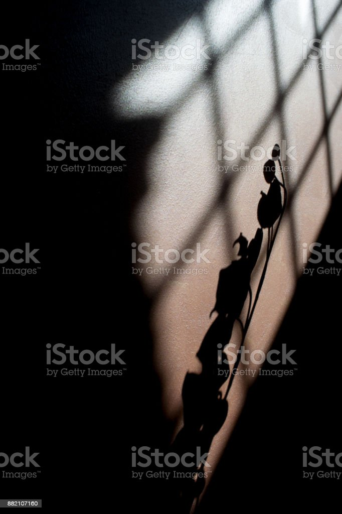 plays of shadows and lights with an orchid