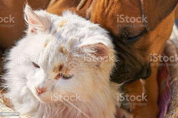 Like cats and dogs picture id536092793?b=1&k=6&m=536092793&s=612x612&h=j5 n3yaw3pb 3gynstqt k8wat 8cspczqx kp7frvg=