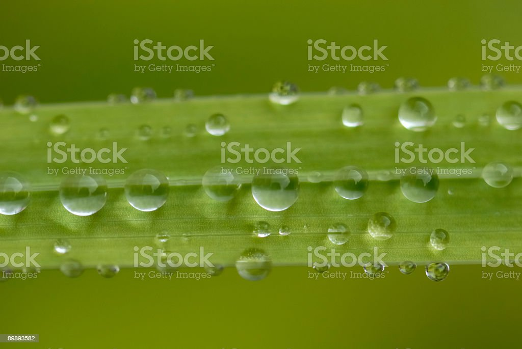 Lil verde puntos foto de stock libre de derechos