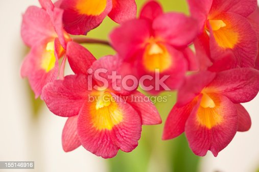 A close up of a branch of small red and yellow cattleya orchids.