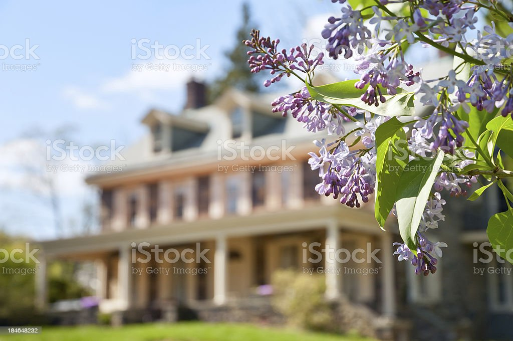 Lilac branch in front of upscale family house stock photo