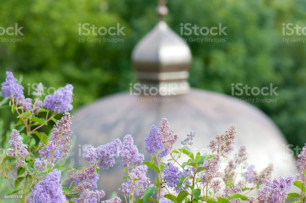 lilac buddleia in front of a summerhouse cupola stock photo