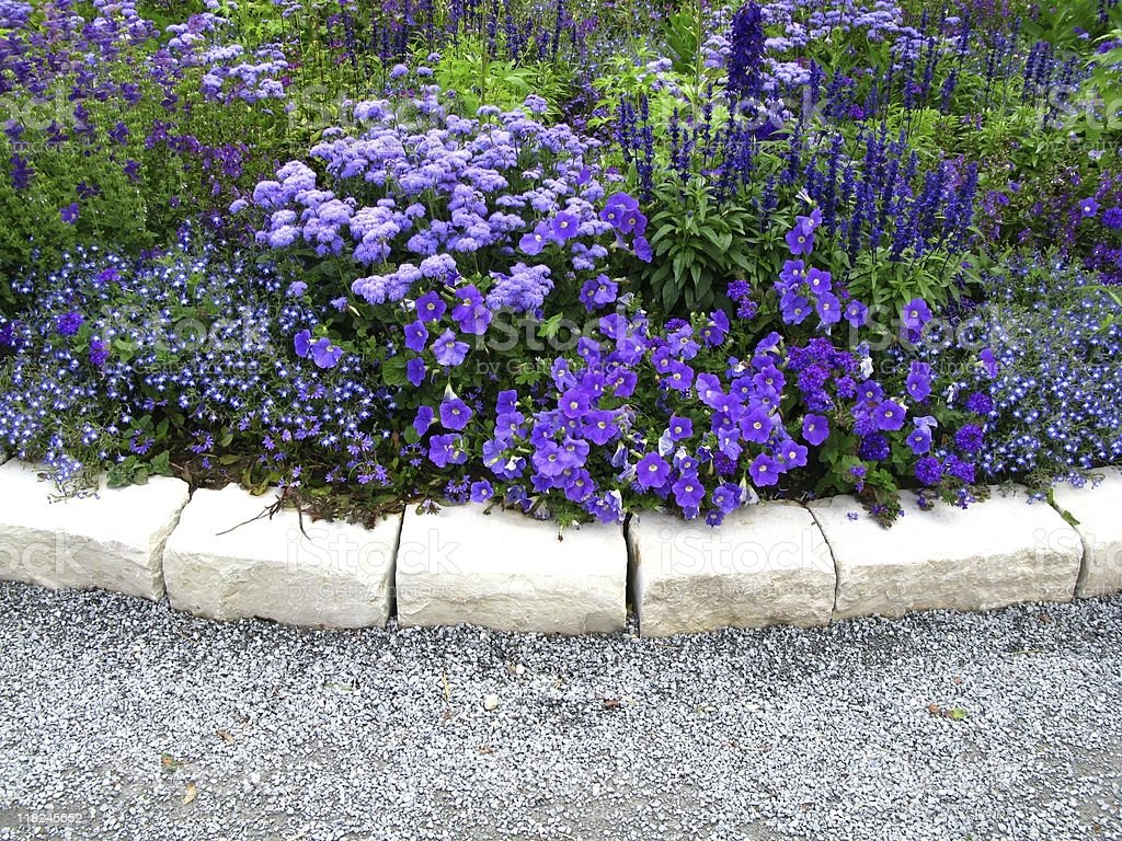 Lilac flowerbed stock photo