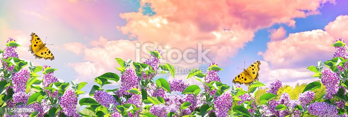 901386728 istock photo Lilac flowers and butterflies in garden against the blue sky with spectacular clouds 1154057393