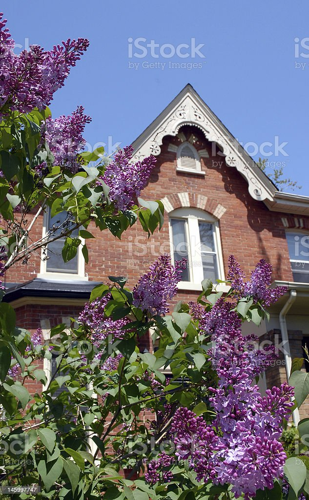 Lilac flowers and old house stock photo
