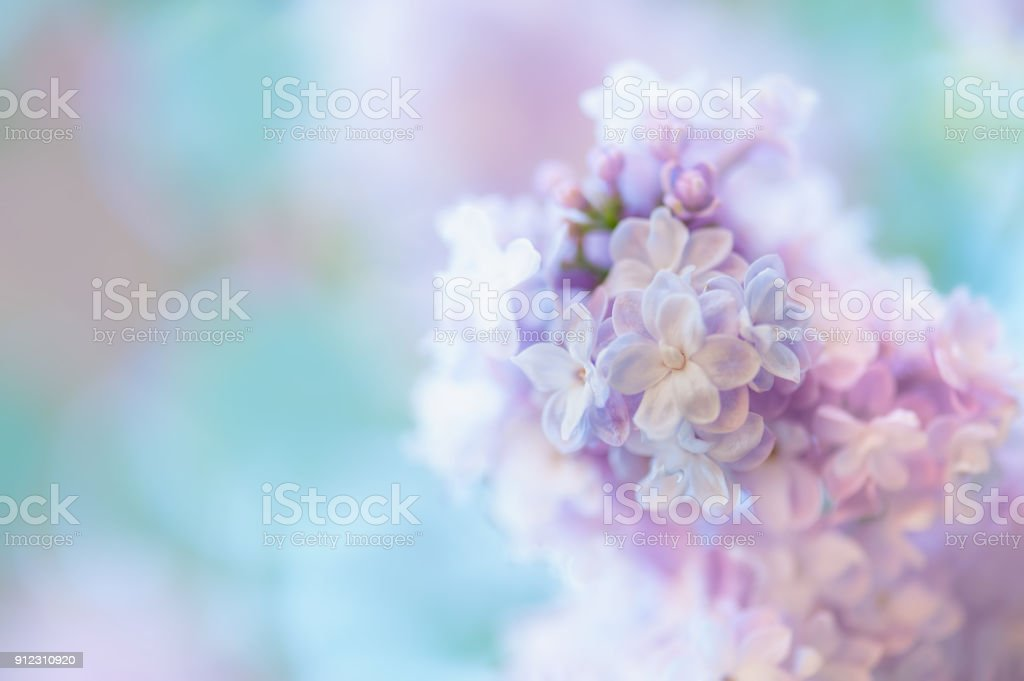 Lilac flowers background stock photo