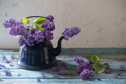 lilac flowers in  metal kettle on white old background