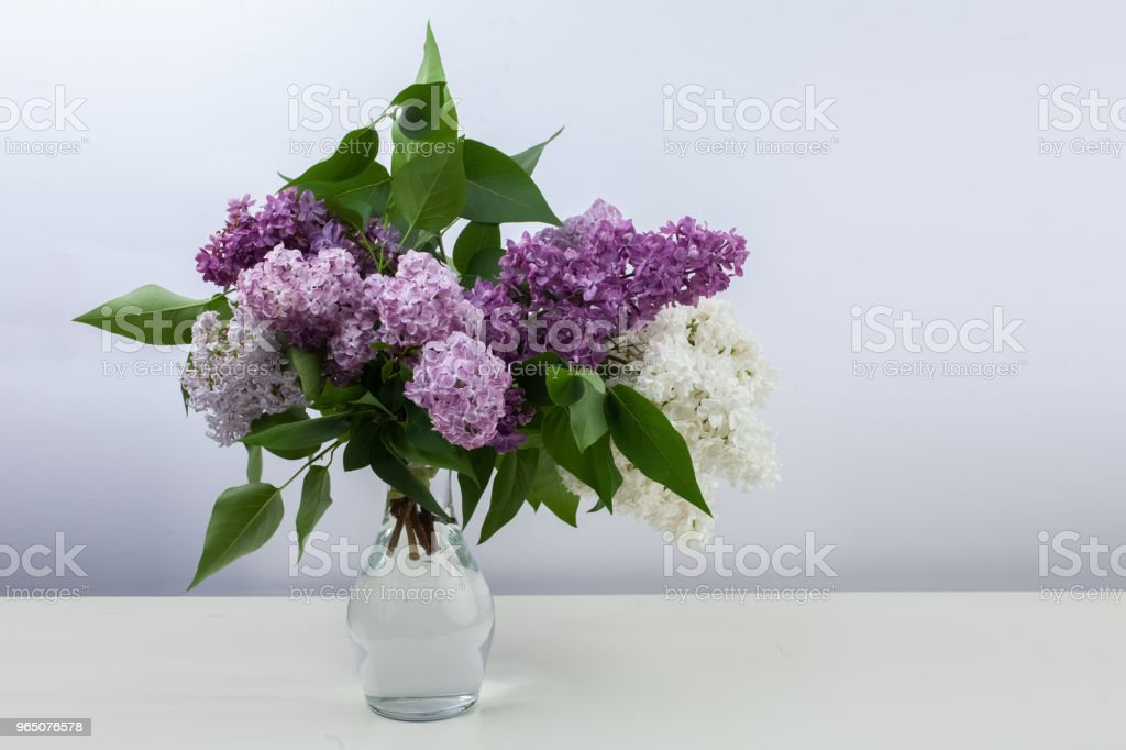 Lilac flowers in vase against white background royalty-free stock photo